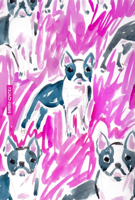 Daily Color #88: Boston Terrier Stare in Pink