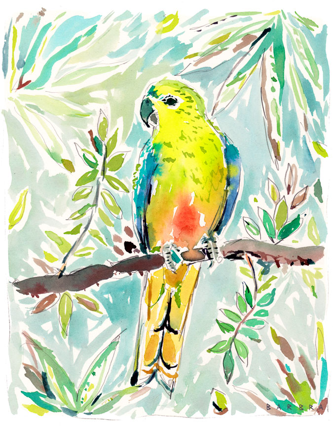CUTIE the Orange Bellied Parrot